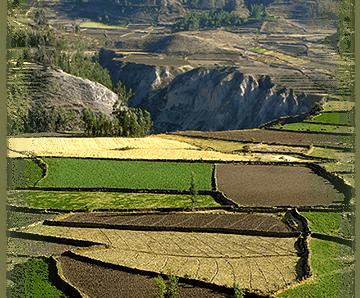 Macafem cultivation grounds