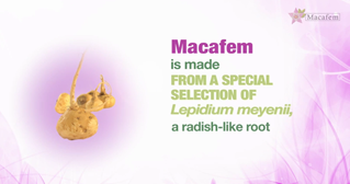 what-is-macafem-2